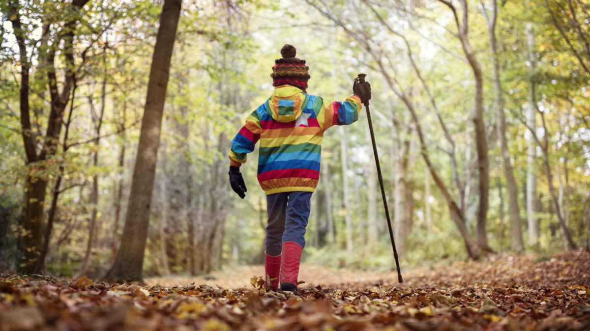 Boy walking with a hiking pole in a forest in autumn or winter